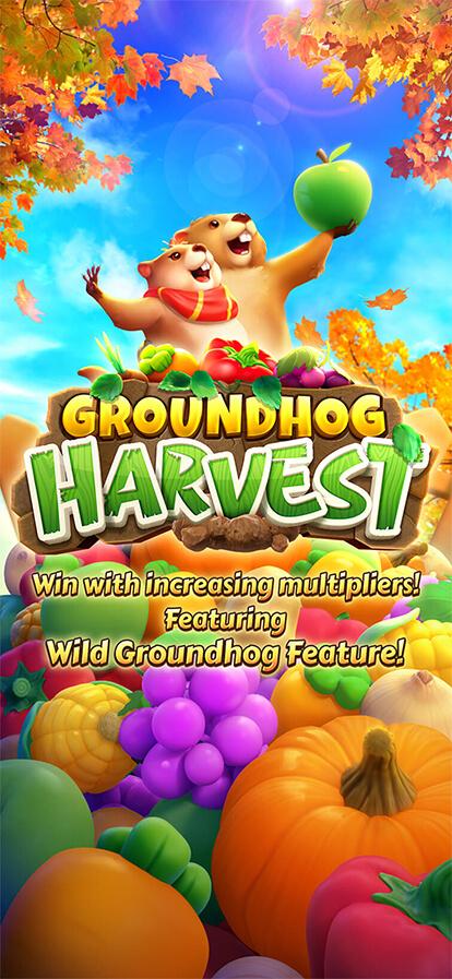 Groundhog Harvest รวย
